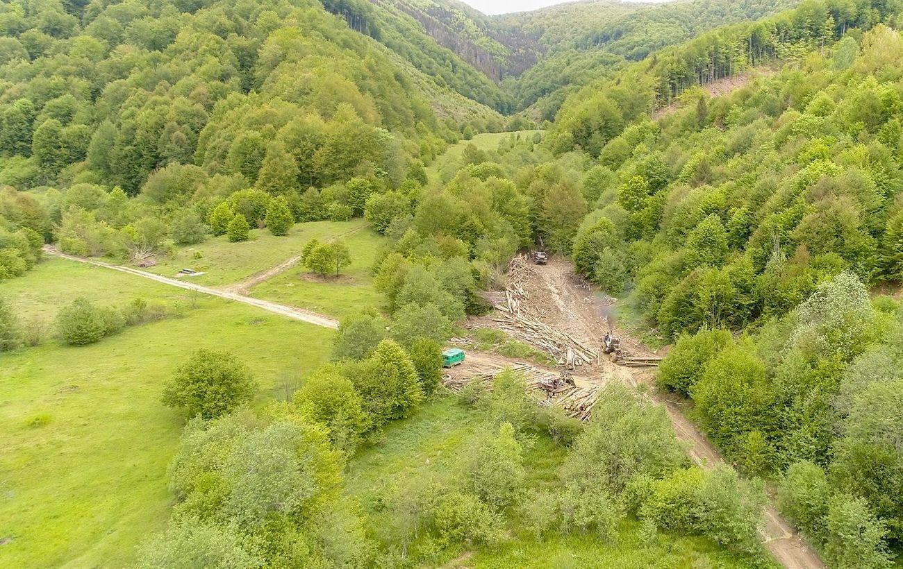 В Україні проведуть інвентаризацію лісів вперше з 1996 року