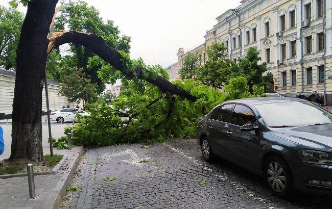 Наслідки негоди у Києві: вітер повалив майже 40 дерев