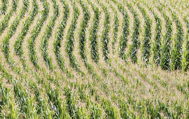 Кабмин вдвое повысил частичную компенсацию процентов по кредитам для аграриев