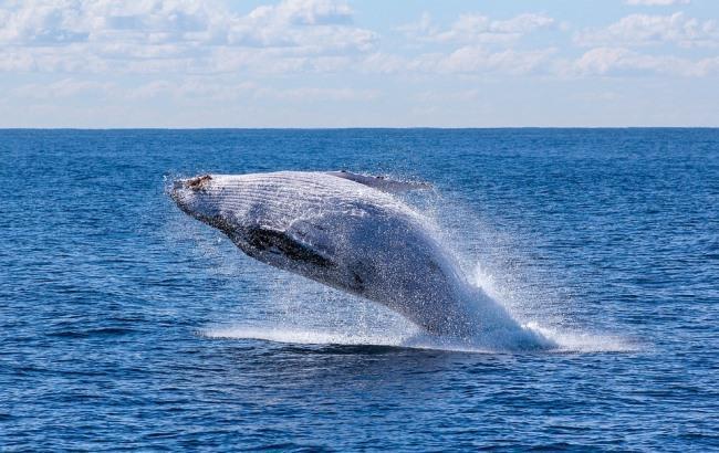 пресс кит игра