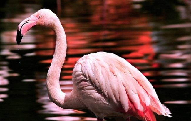 Маленькие дети до смерти забили розового фламинго в зоопарке