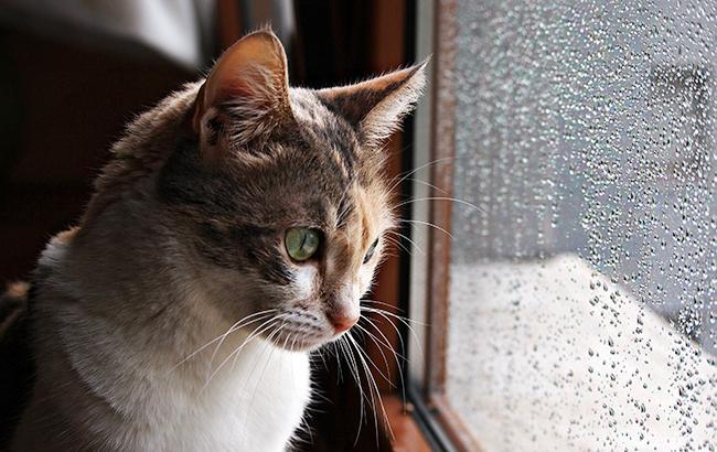 Фото: в Украине местами дожди (flickr.com/veronica_rayne)