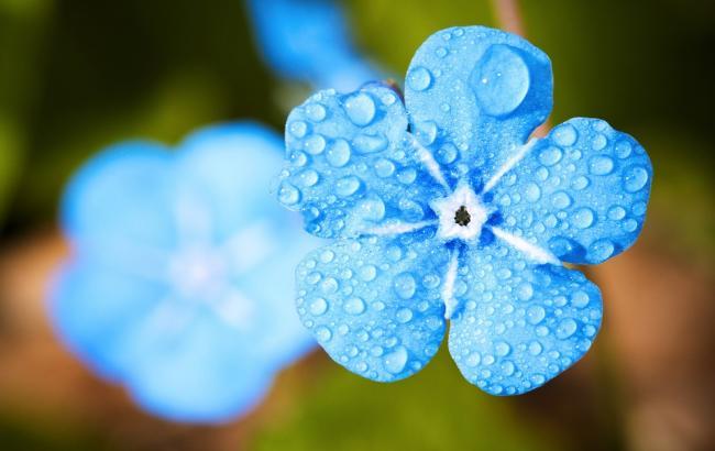 Фото: Цветок осенью (pixabay.com/EvgeniT)