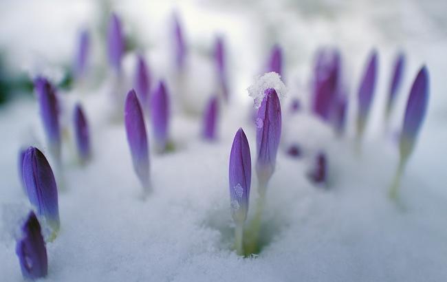 Фото: Весна 2018 (pixabay.com/jplenio)