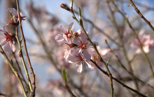 """""""Верным адептам весны"""": синоптик дала прогноз на 8 марта"""