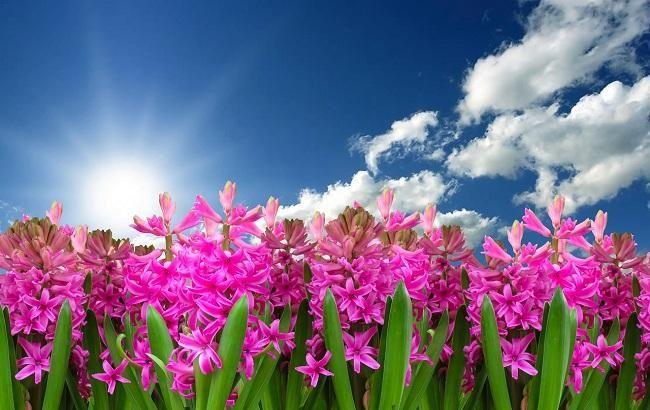 """""""Открыть нараспашку все окна"""": как исполнить желания и привлечь достаток в День весеннего равноденствия"""
