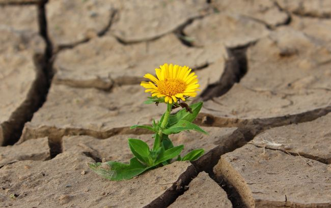 Мир движется к катастрофическому повышению температуры в этом столетии, - ООН