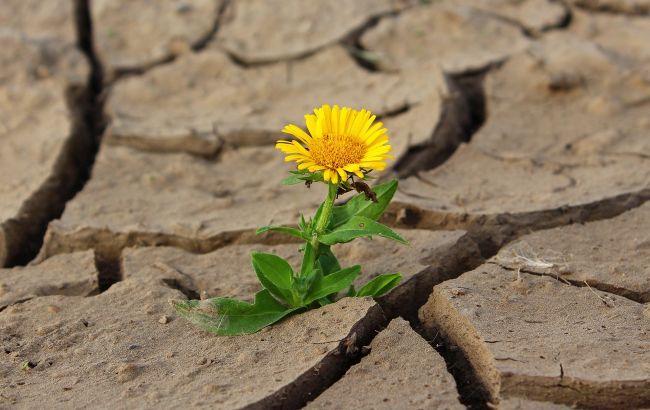 2021 год будет бить рекорды: в Украине прогнозируют сильную засуху