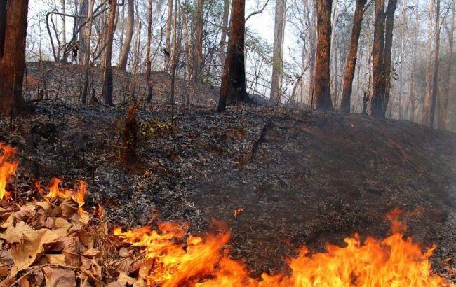 Фото: Гидрометцентр предупреждает о высокой пожароопасности