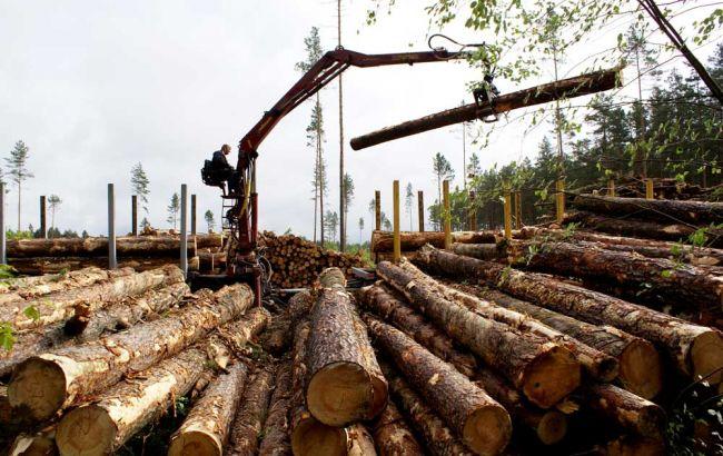 Фото: в Хмельницкой области незаконно вывезли лесоматериалы на 45 млн гривен
