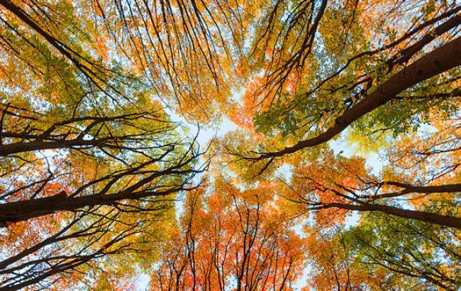 Фото: Осень в киевских парках (facebook.com)