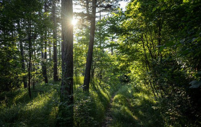 В Госэкоинспекции назвали сумму ущерба лесам за почти полгода