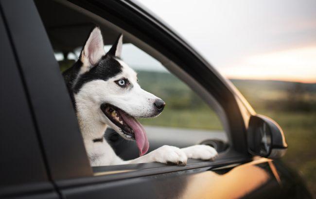 В отпуск с домашним любимцем: полный список правил перевозки животных в транспорте