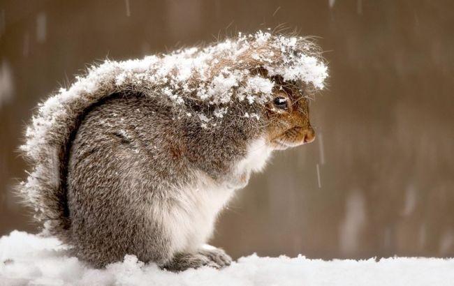 Фото: в Україні очікуються сніг і дощі