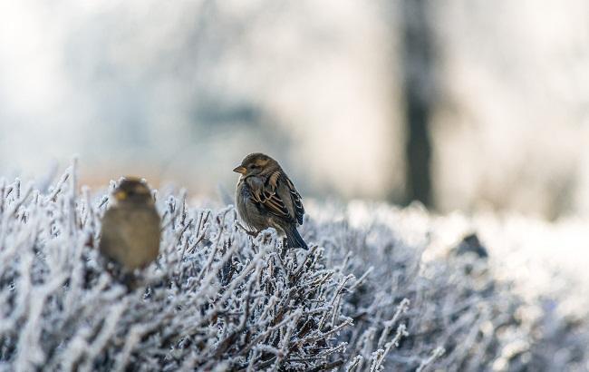 Фото: Холод (unsplash.com/Genessa Panainte)