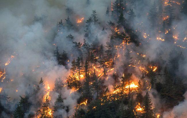 В Іспанії локалізували масштабну лісову пожежу, допомогли дощі