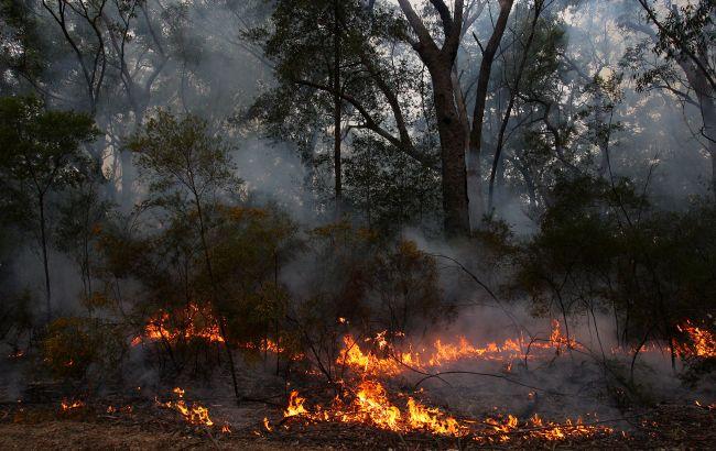 Синоптики предупредили о пожарной опасности в Украине: где и что запрещено