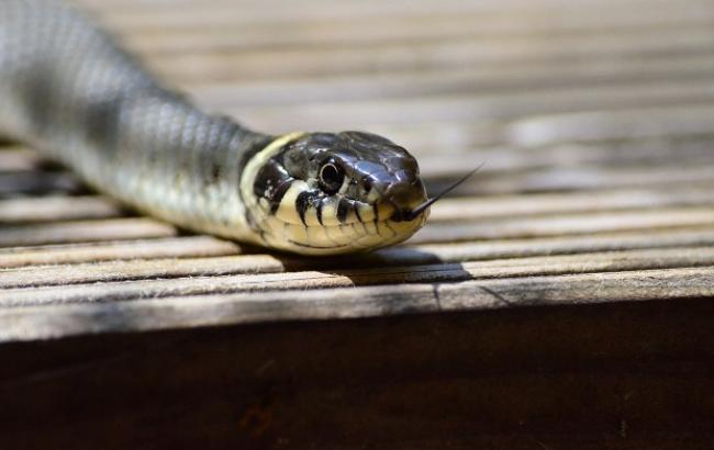 Известный блогер умер от укуса змеи