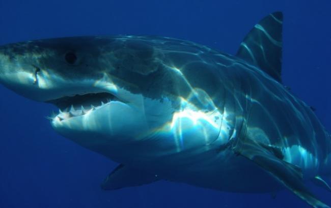 В Египте акула убила 41-летнего туриста