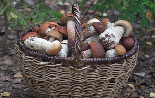 Фото: Сім'я повернулася додому з грибами (facebook.com)