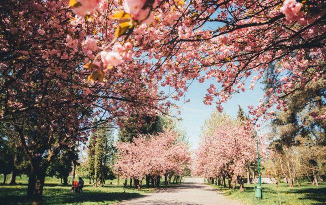 Красочное явление: почему май - идеальное время для путешествия на Закарпатье