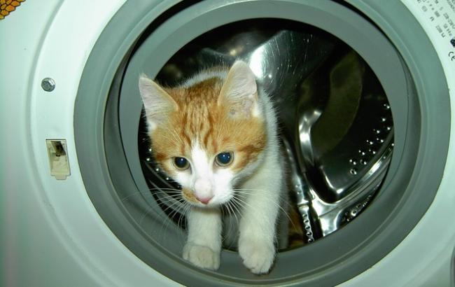 Сеть поверг в шок жуткий поступок россиянина с котом