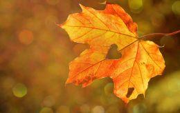 Свято 25 жовтня: що не можна робити, важливі традиції і у кого день ангела