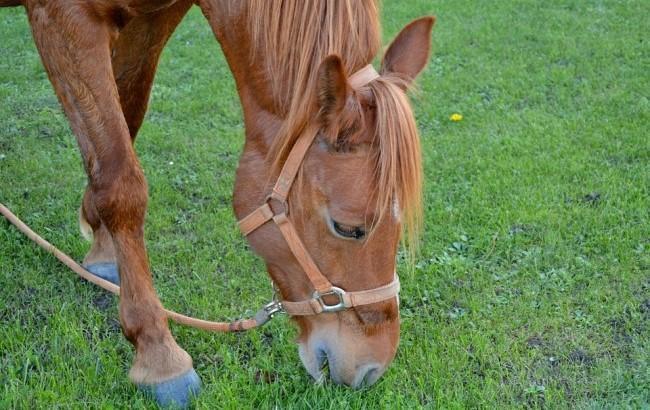 Кінь фото