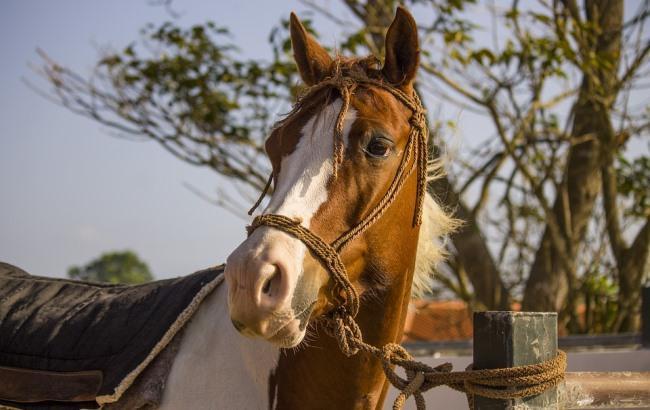Фото: Лошадь (pixabay.com/TC-TORRES)