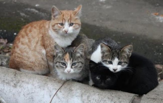 Фото: Бездомні кішки