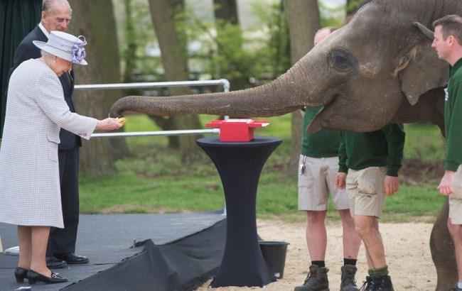 Фото: Єлизавета II, герцог Единбурзький та слон Донна (twitter.com/RoyalFamily)