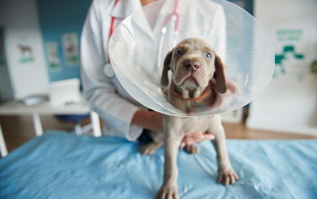 В Латвии заявили о первом случае COVID-19 у собаки