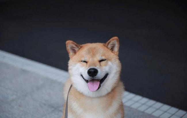 Фото: Собака