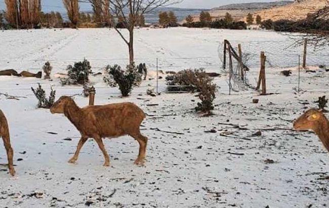 В Африці погодні аномалії: випав сніг, фіксують рекорди мінімальної температури