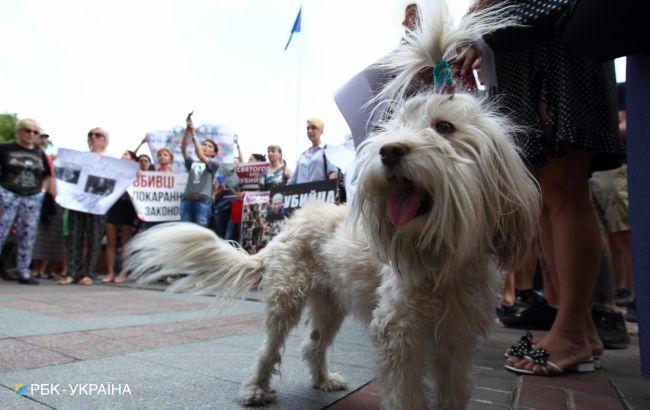 Зеленський підписав посилення відповідальності за жорстоке поводження з тваринами