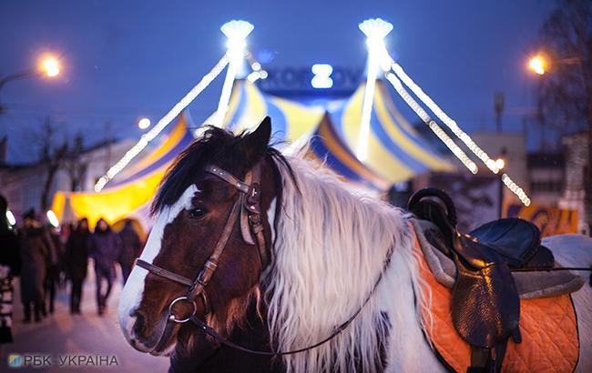 Кабмин поддержал запрет использования животных в цирках