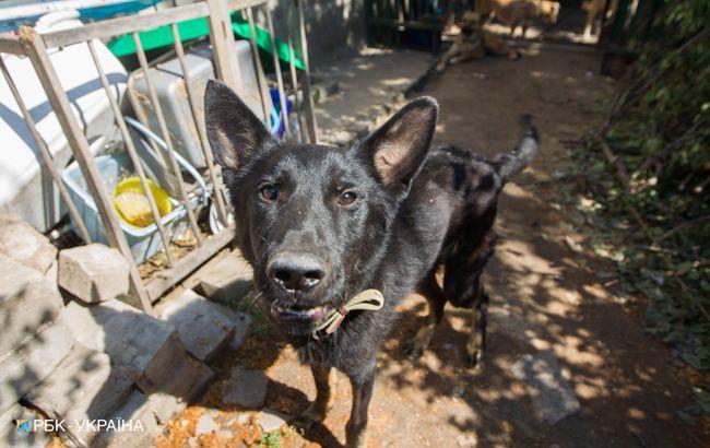 Скотный двор: в Украине могут ввести обязательную регистрацию домашних животных