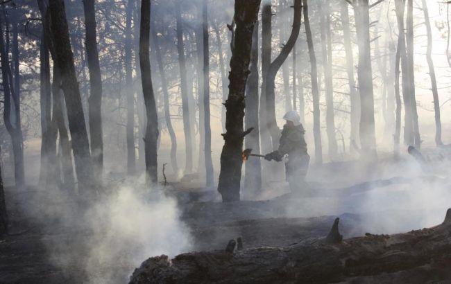 В Запорожской области произошел лесной пожар на острове Хортица