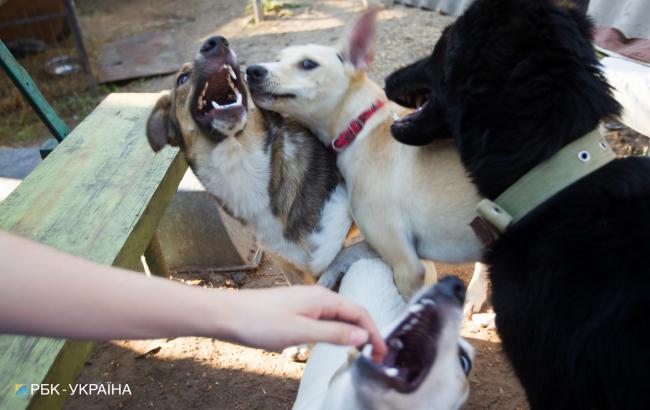 """""""Такого не было еще никогда"""": волонтер пожаловалась на огромное количество оставленных собак"""