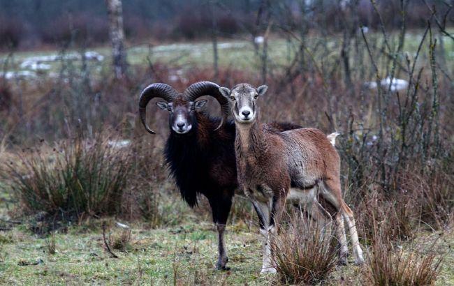 Тварини з Червоної книги: в Україні з'явиться нова незвичайна локація
