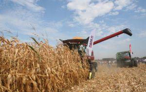 Решение избирательно снизить НДС для аграриев пролоббировано производителями, - эксперт