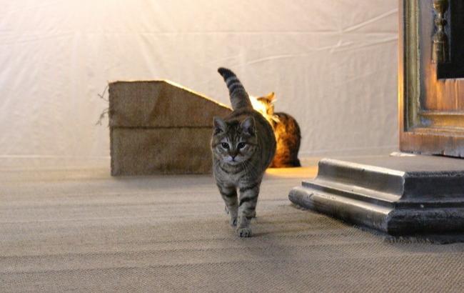Фото: Котів можна вважати почесними мешканцями Стамбулу (РБК-Україна)