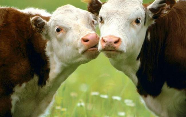 Поголів'я худоби в Україні в березні скоротилося на 8,9%