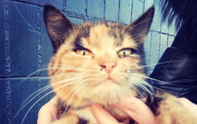 У Харкові оголосили пошук господарів для несподівано довірливою кішки