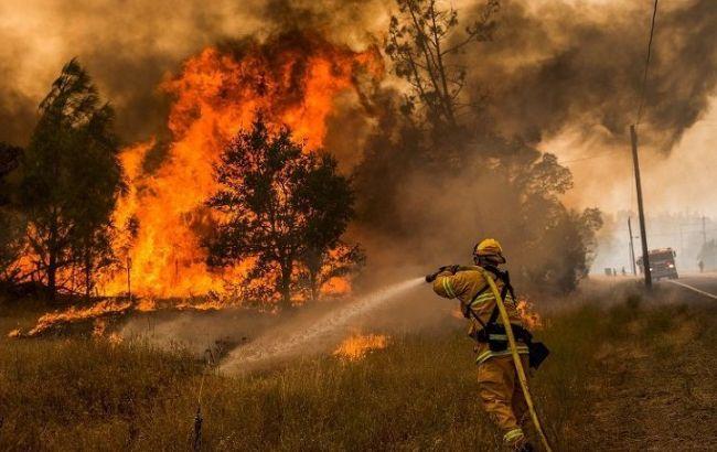 Фото: в результате лесных пожаров в Калифорнии два человека получили ожоги