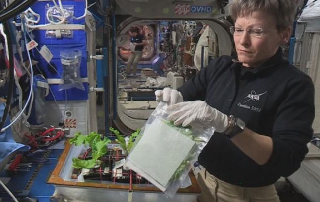 Фото: Астронавт вирощує капусту