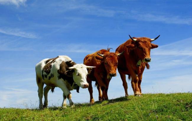 В новейшей Зеландии коровы чудом непострадали отземлетрясения— Остров спасения
