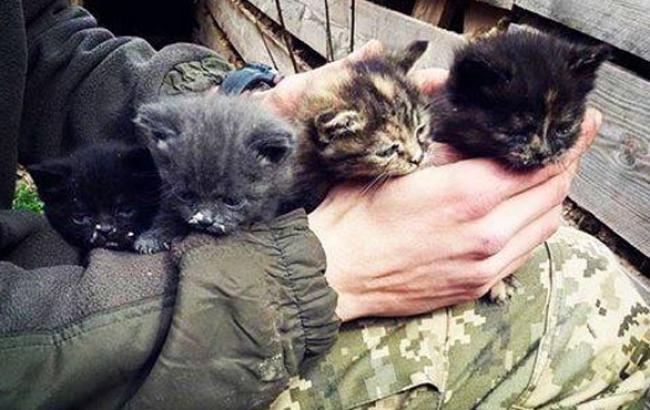Фото: Врятовані кошенята (Facebook.com)