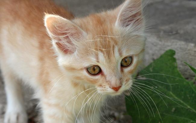 Фото: Коти (pixabay.com/Timur85)