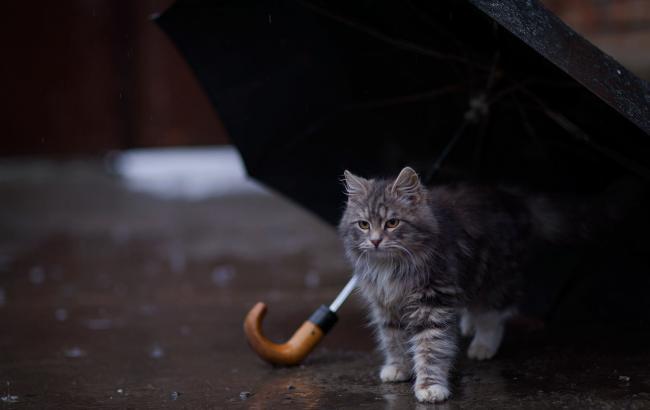 Фото: в Україні переважно дощі